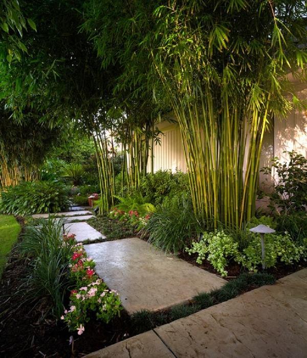 Bambu-ecologia